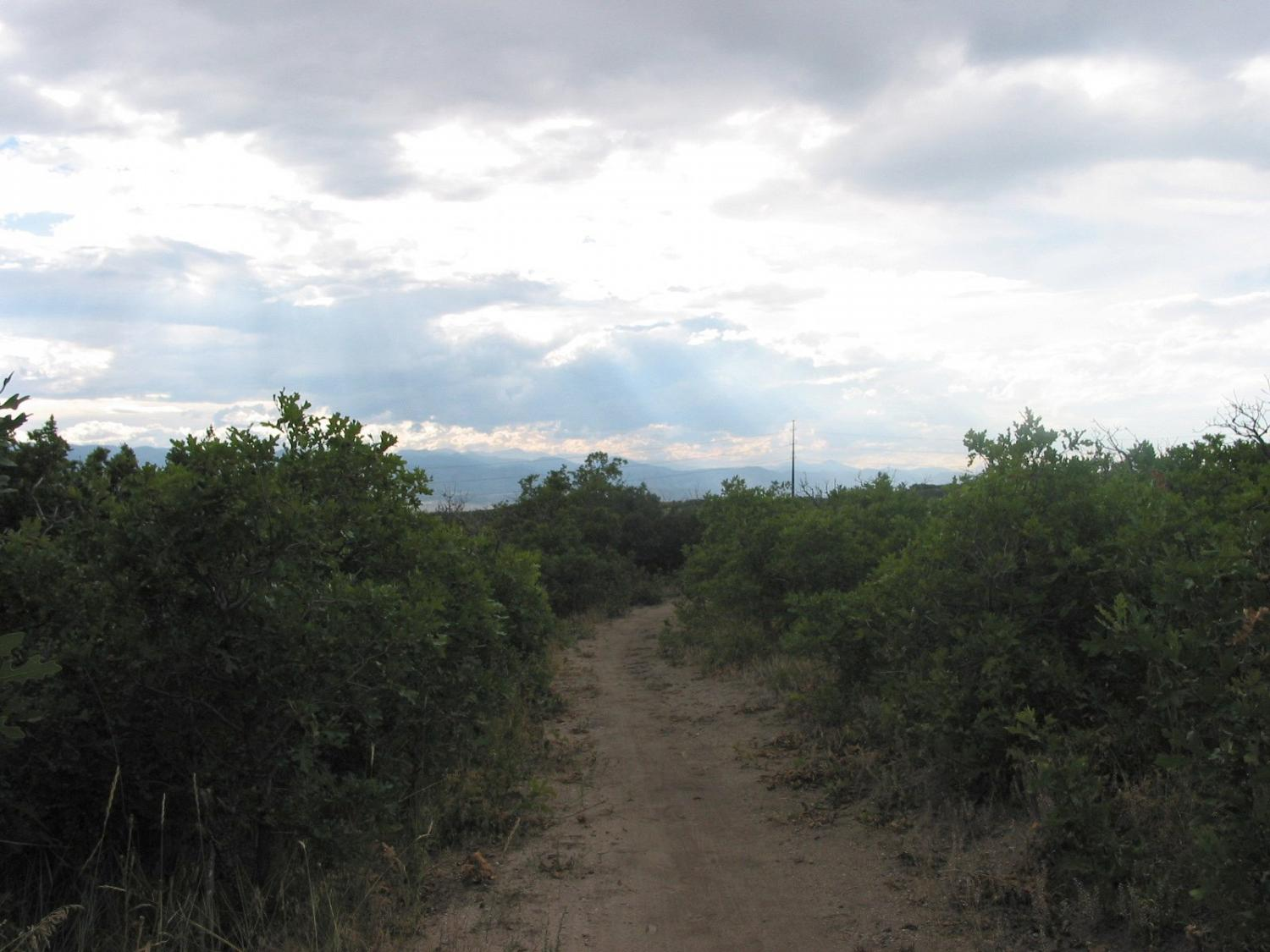Tenderfoot trail winding through the scrub oak on August 19, 2010