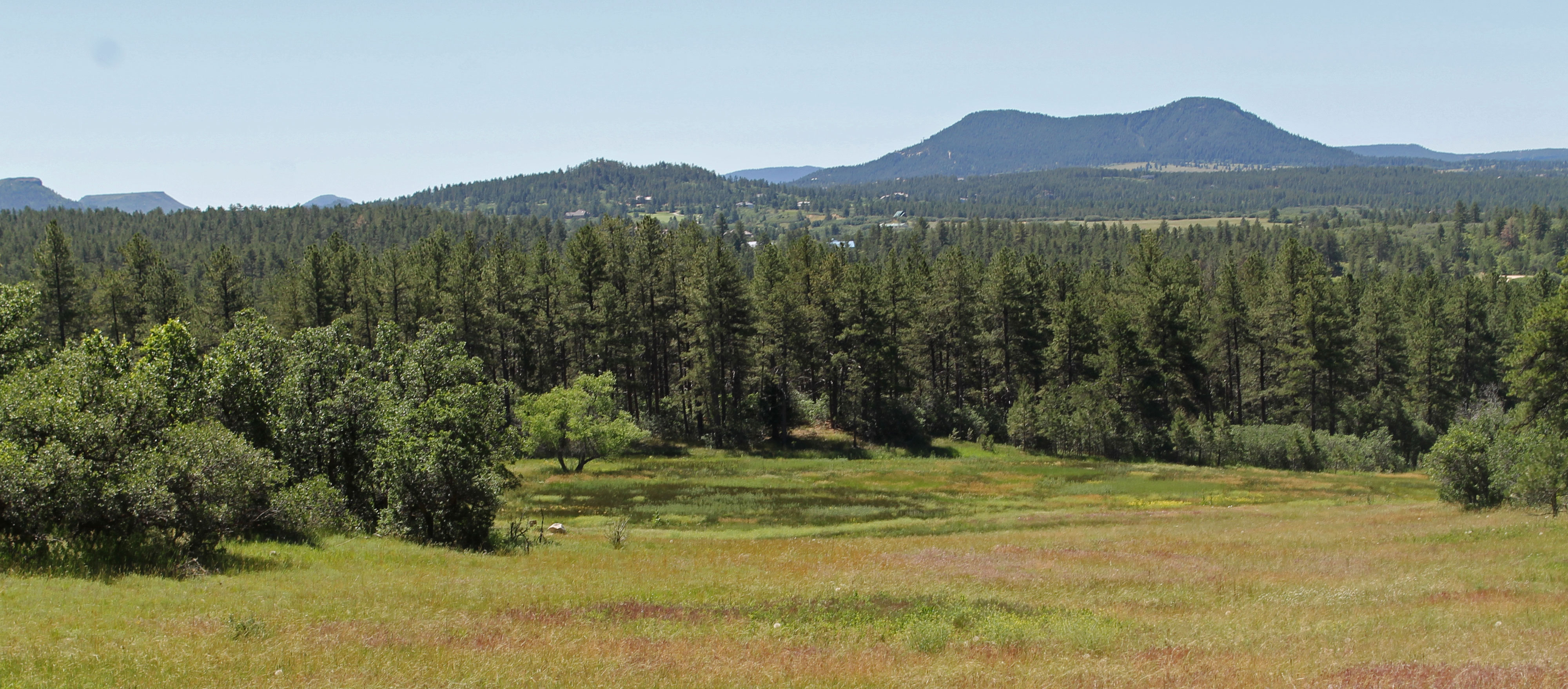 Dawson's Butte Trail Meadow